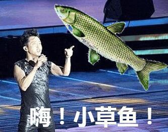 转发了那么多锦鲤,没想到败给一只草鱼